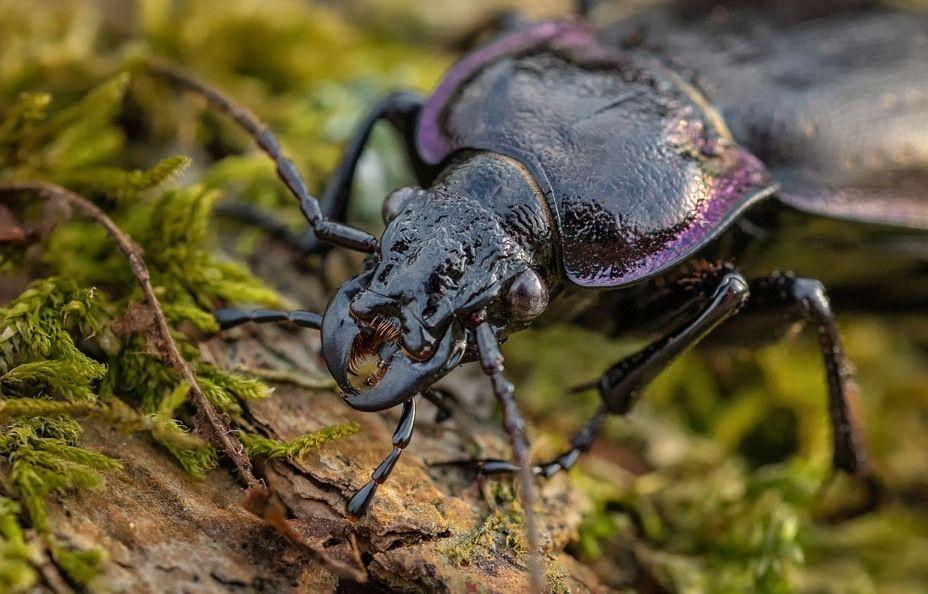 Фотовыставку о насекомых и рептилиях откроют в Дарвиновском музее