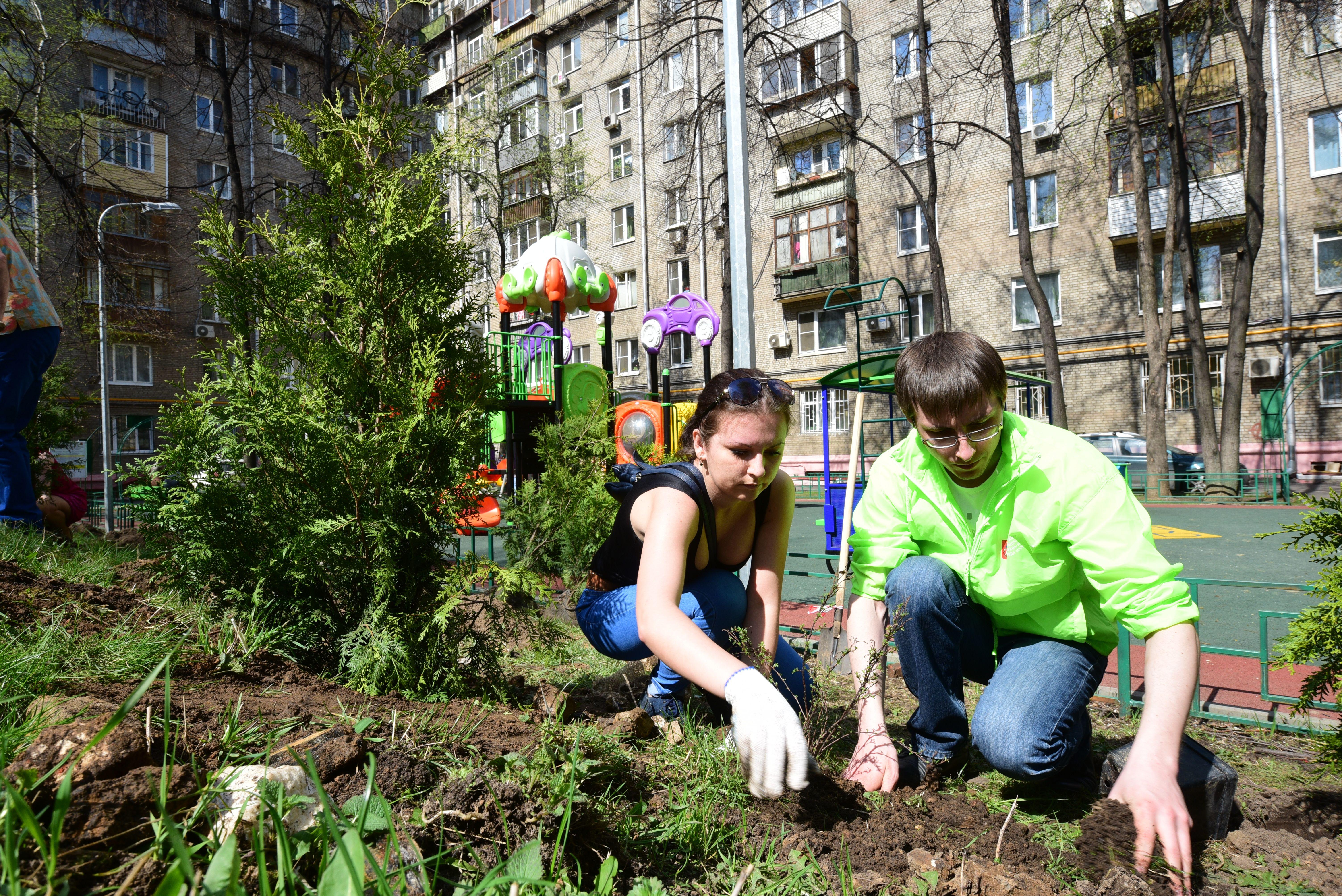 Более двух тысяч заявок подано на посадку именных деревьев в Москве