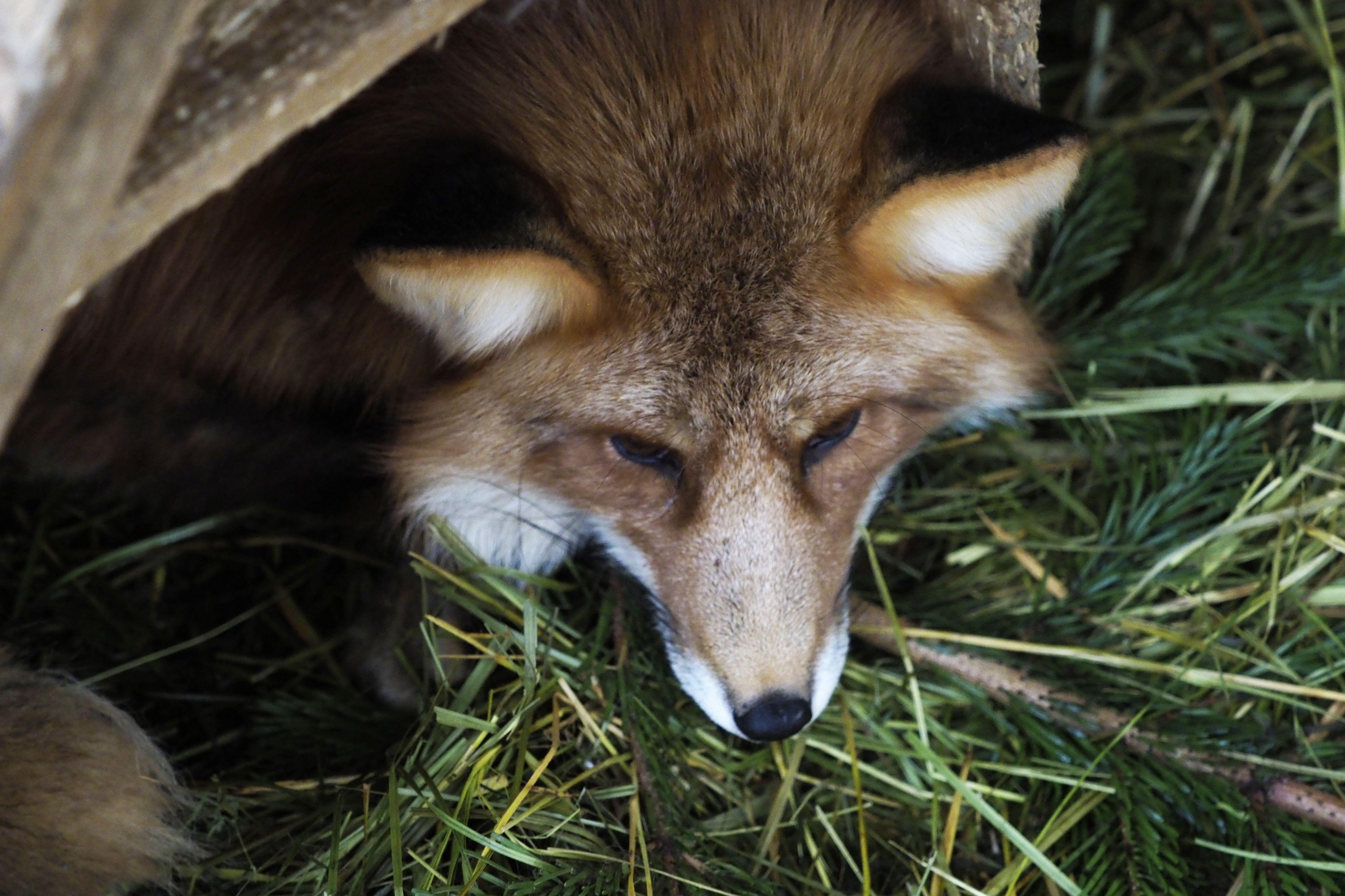 Власти Москвы объяснили появление лесных животныхв городе