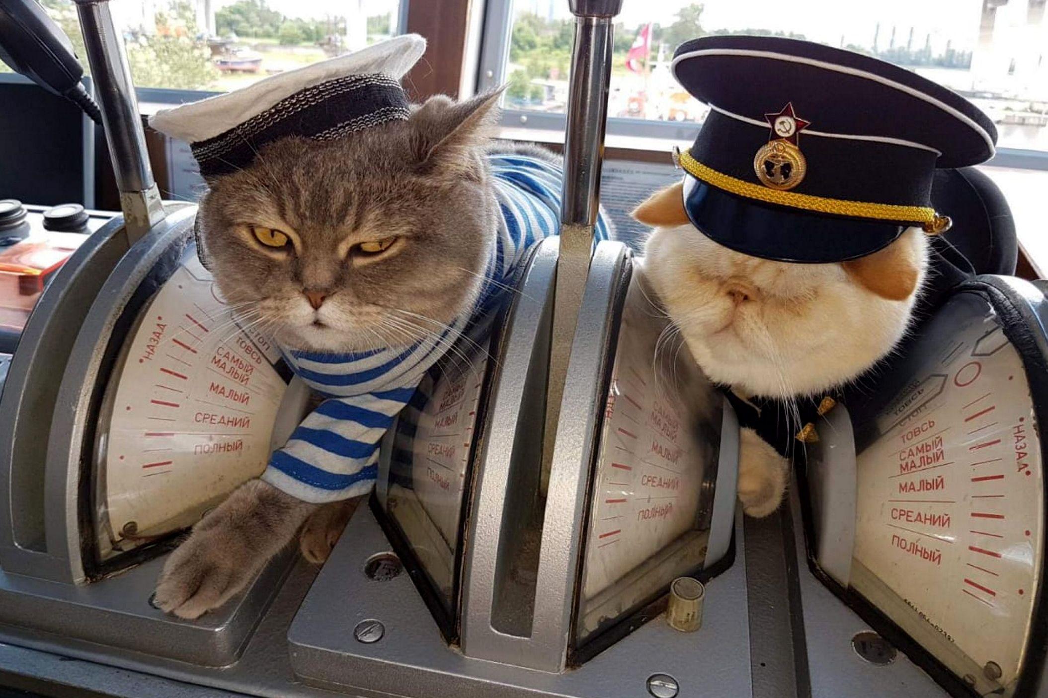 Москвичам пригрозили ожирением домашних животных