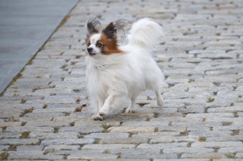 Кинолог порекомендовал пожилым москвичам заводить небольших собак