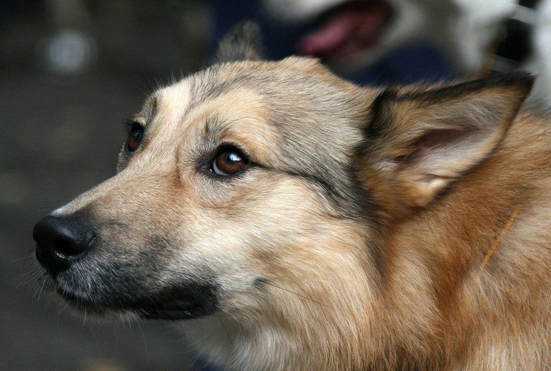 Собаки из приютов найдут своих хозяев в «Садовниках»