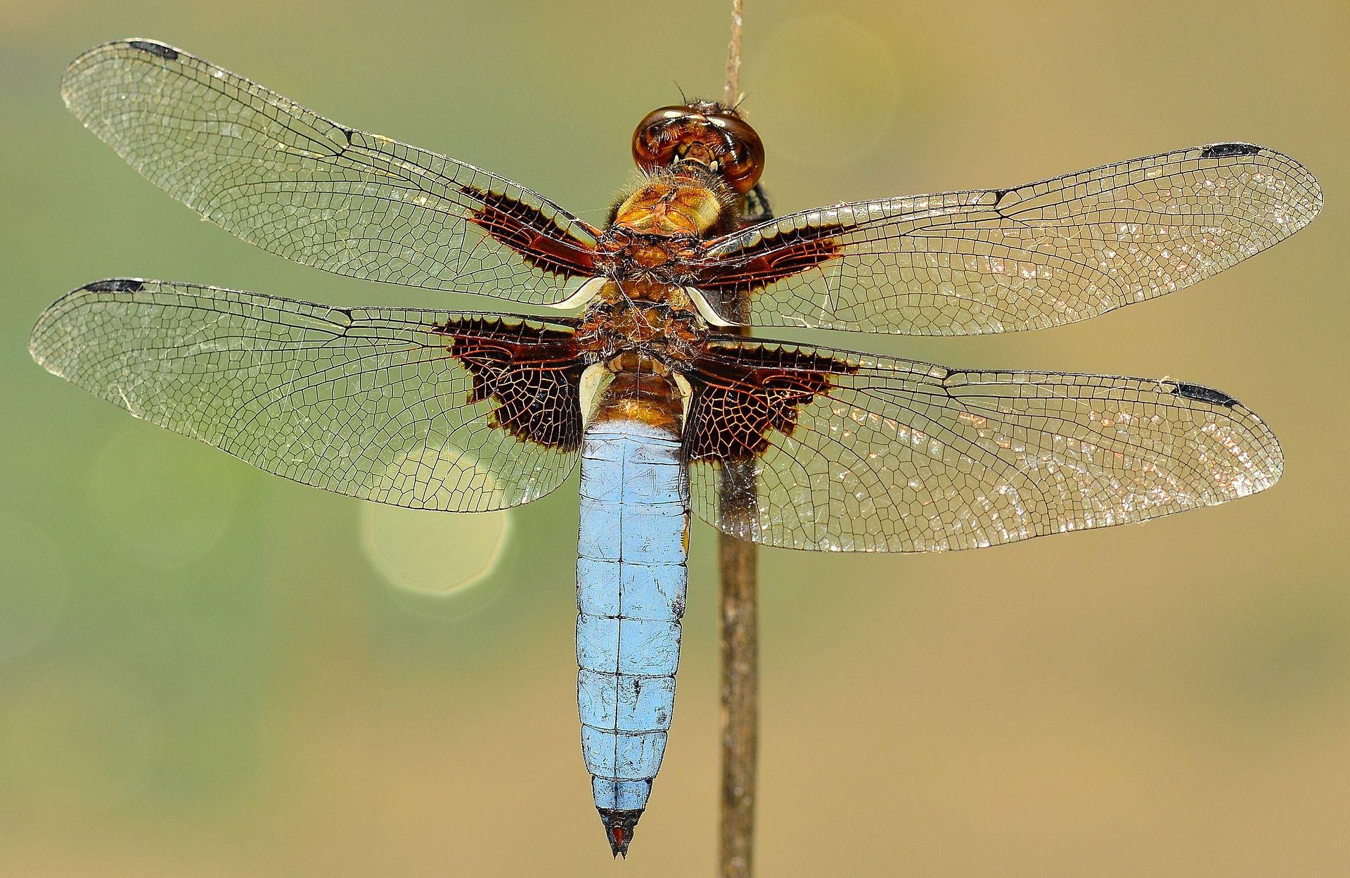 Гости программы Dragonfly узнают, где в Москве водятся редкие стрекозы