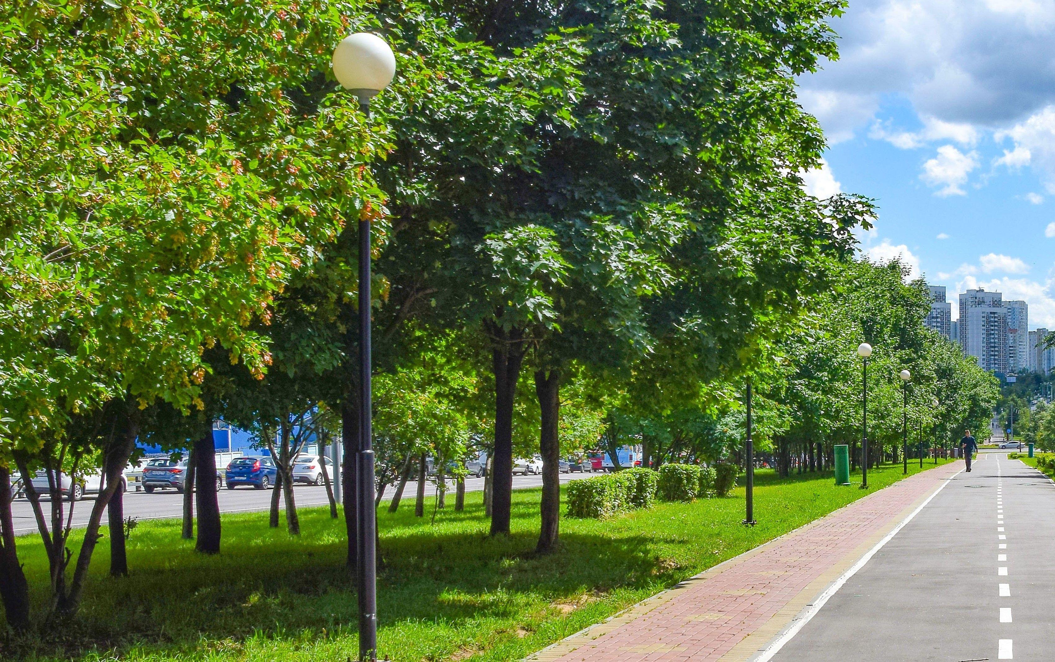Питание и лечение: в столице начались работы по уходу за деревьями