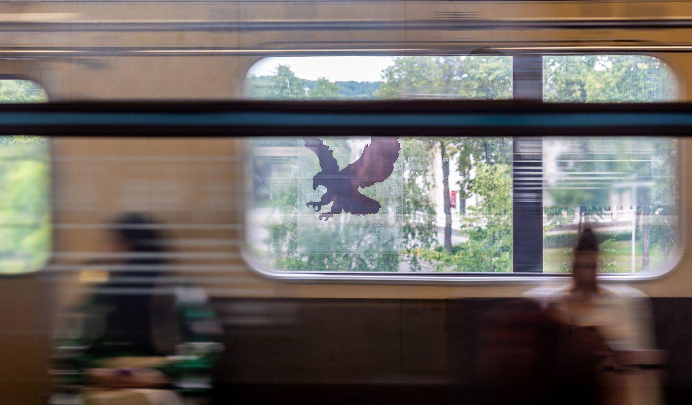 Наклейки для отпугивания птиц поместили на станциях «Чертановская» и «Алма-Атинская»
