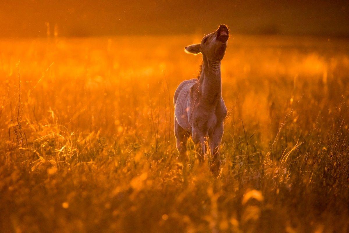 Москвичам покажут один год из жизни диких лошадей Пржевальского