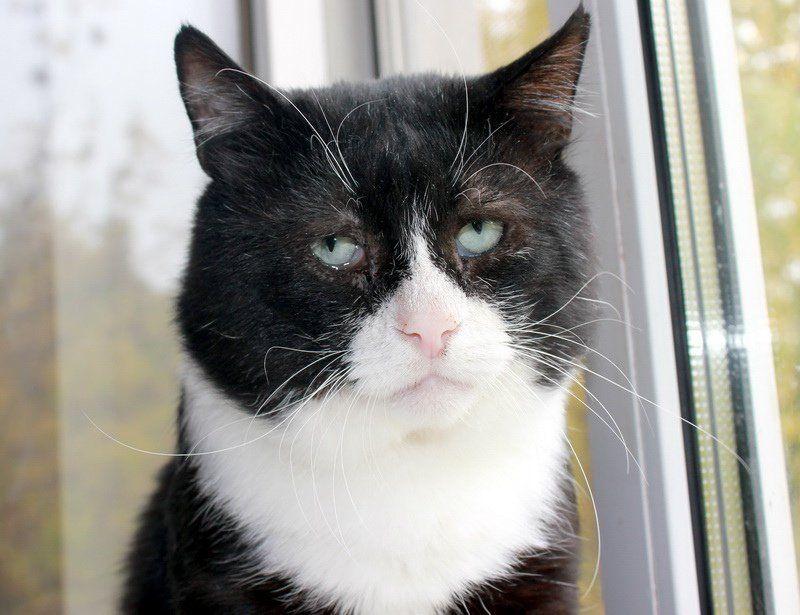 Самый грустный кот в Москве ищет хозяина