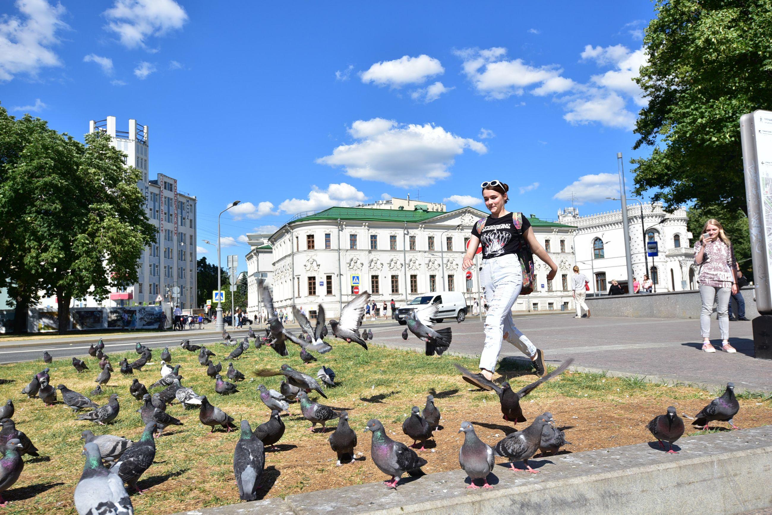 Жителей Москвы призвали не подкармливать голубей