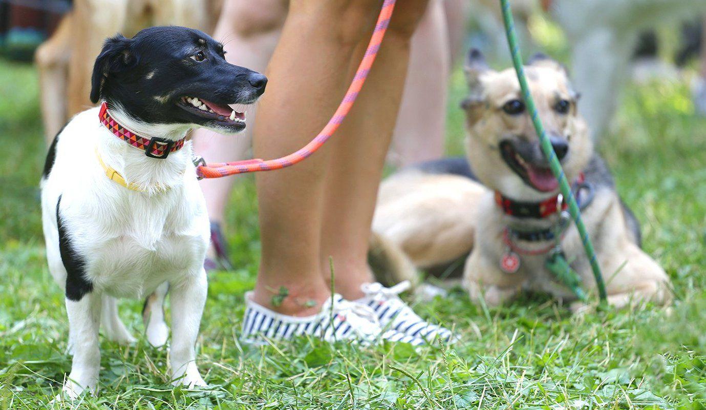 Жителей юга пригласили на ветеринарные уроки