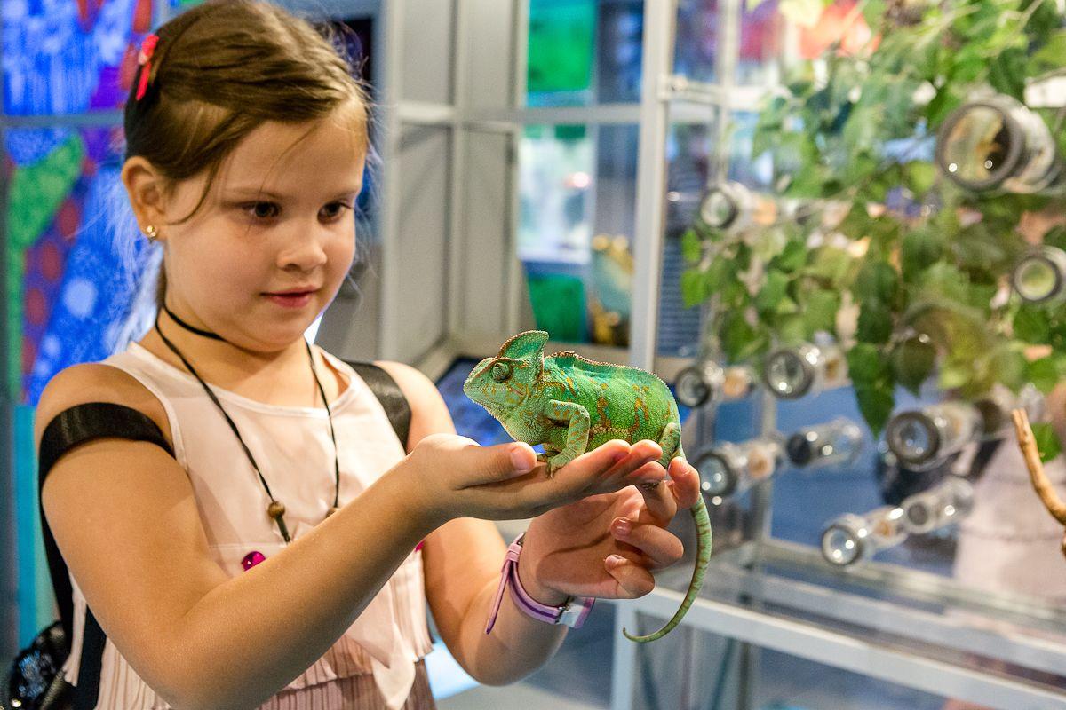 Пятилетним детям обеспечат бесплатный вход в интерактивный центр Дарвиновского музея