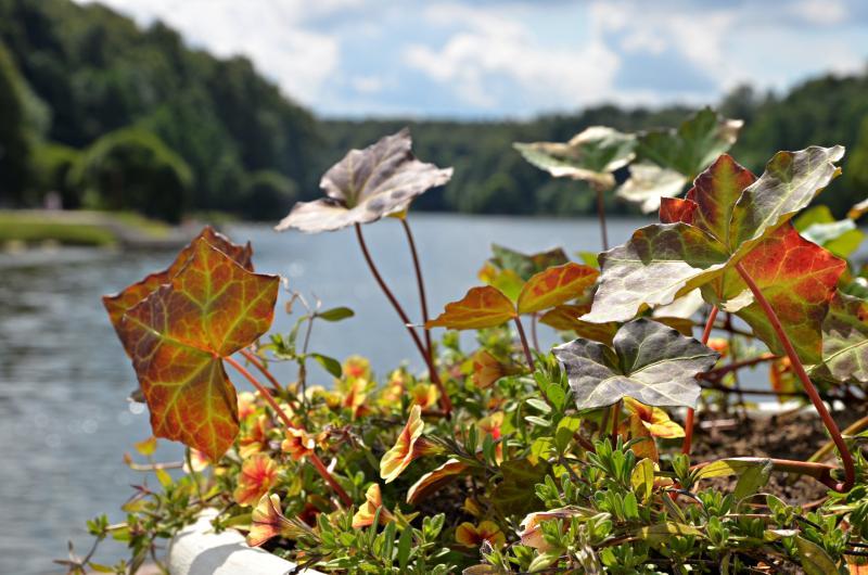 Торжественное открытие парка у пруда «Бекет»