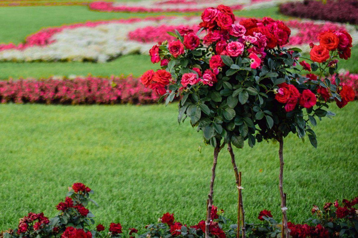 Эскизы исторических садов для фестиваля показали в «Царицыне»