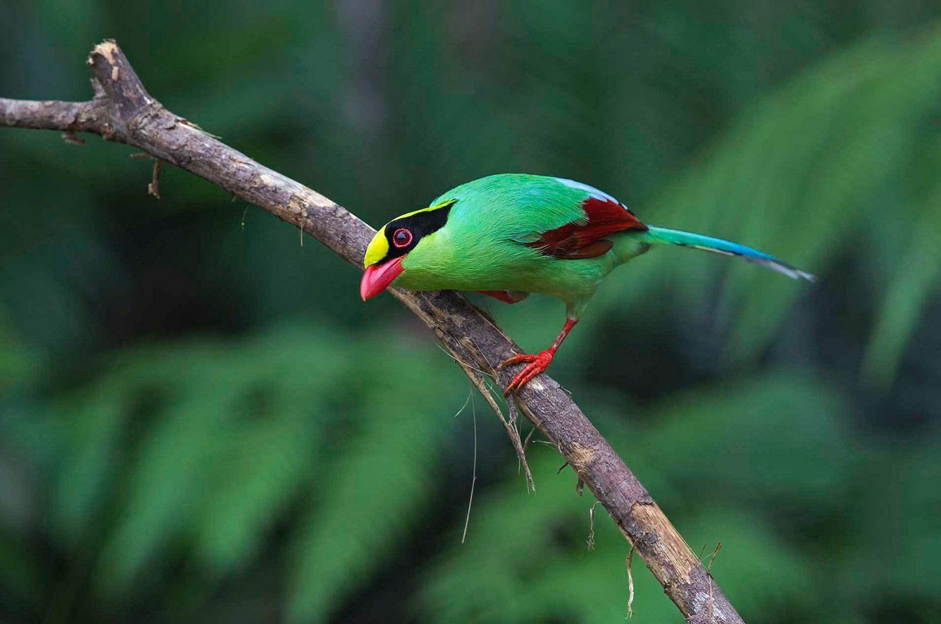 Разноцветных ворон покажут в Дарвиновском музее