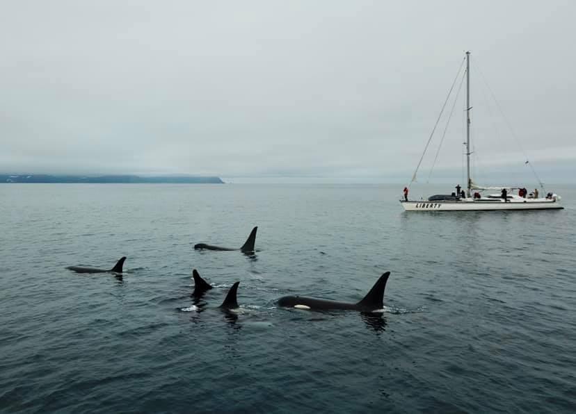 Тихий океан и Командорские острова: в Дарвиновском музее расскажут о путешествиях на парусной яхте