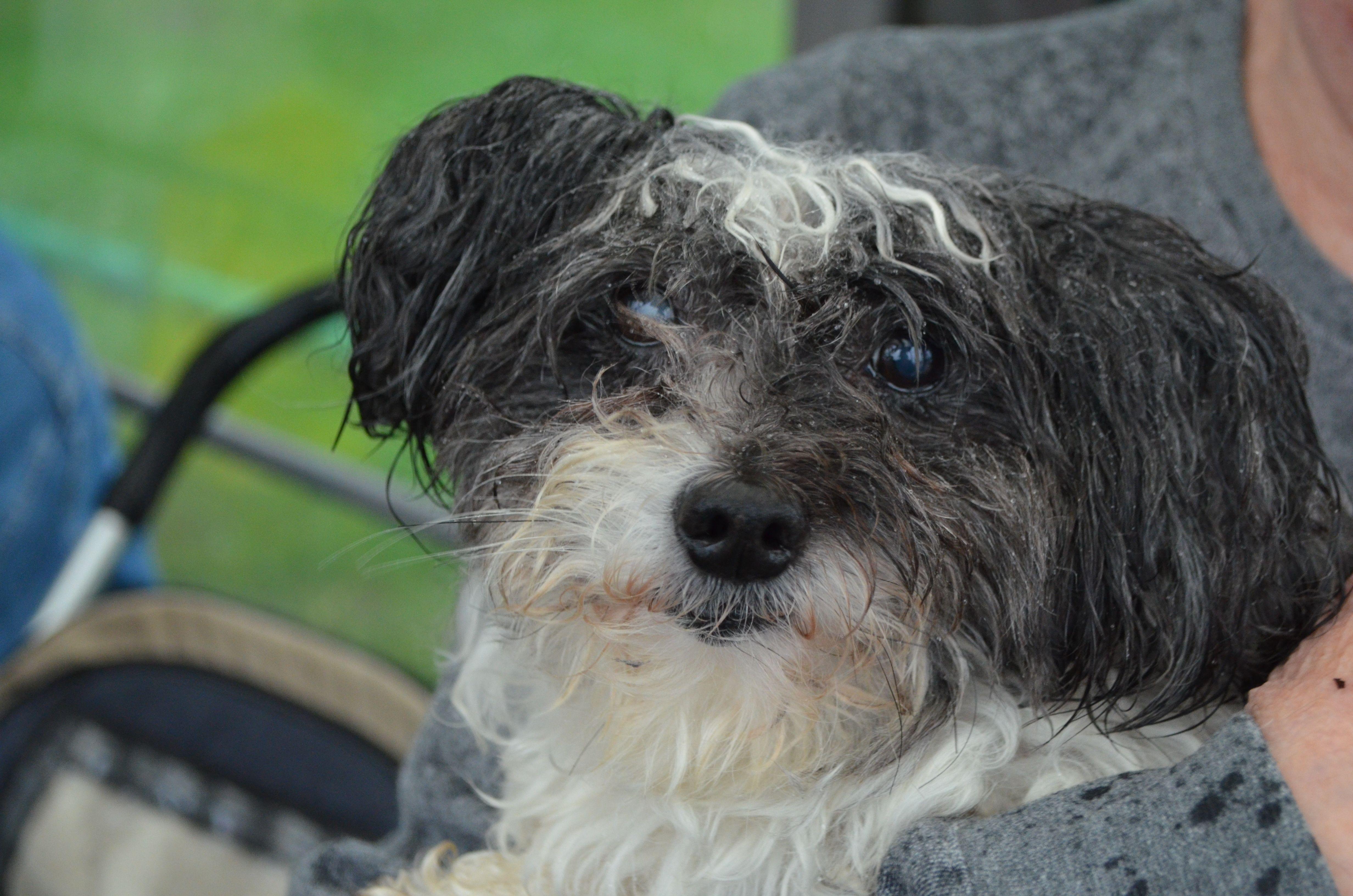Ветеринары посоветовали москвичам не выводить питомцев под дождь