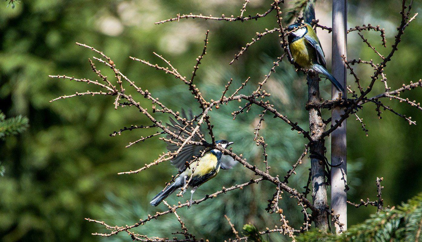 Дни пернатых: горожан пригласили исследовать столичных птиц