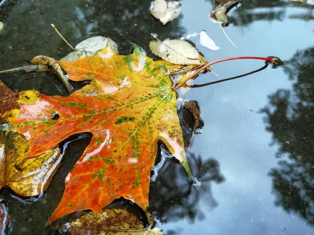 Осень наступила: народный корреспондент запечатлел наступление золотого времени года