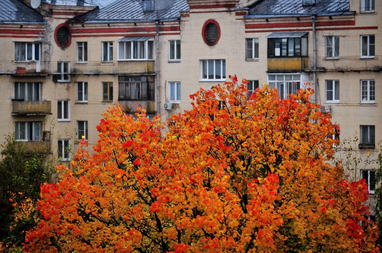 Вторая неделя октября принесет ноябрьские холода в Москву