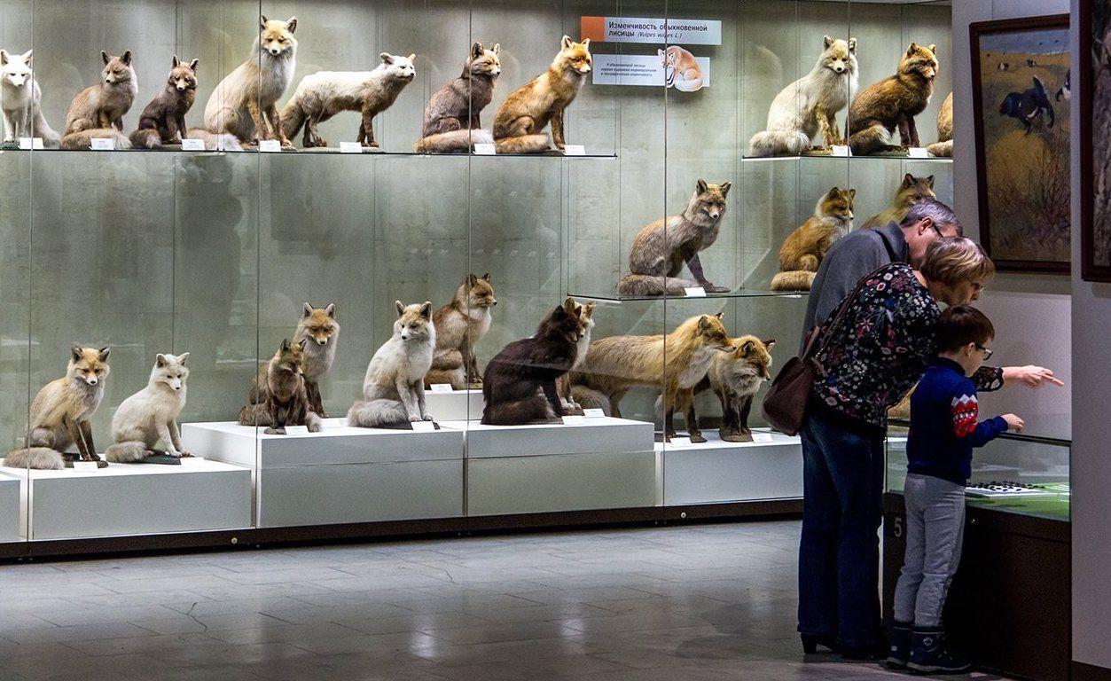 День лешего: ребята в костюмах лесных жителей бесплатно посетят Дарвиновский музей