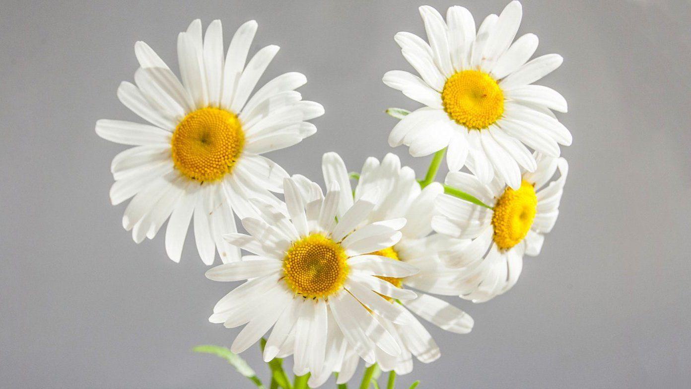 Цветущие сады: на набережной Марка Шагала высадят тысячи растений