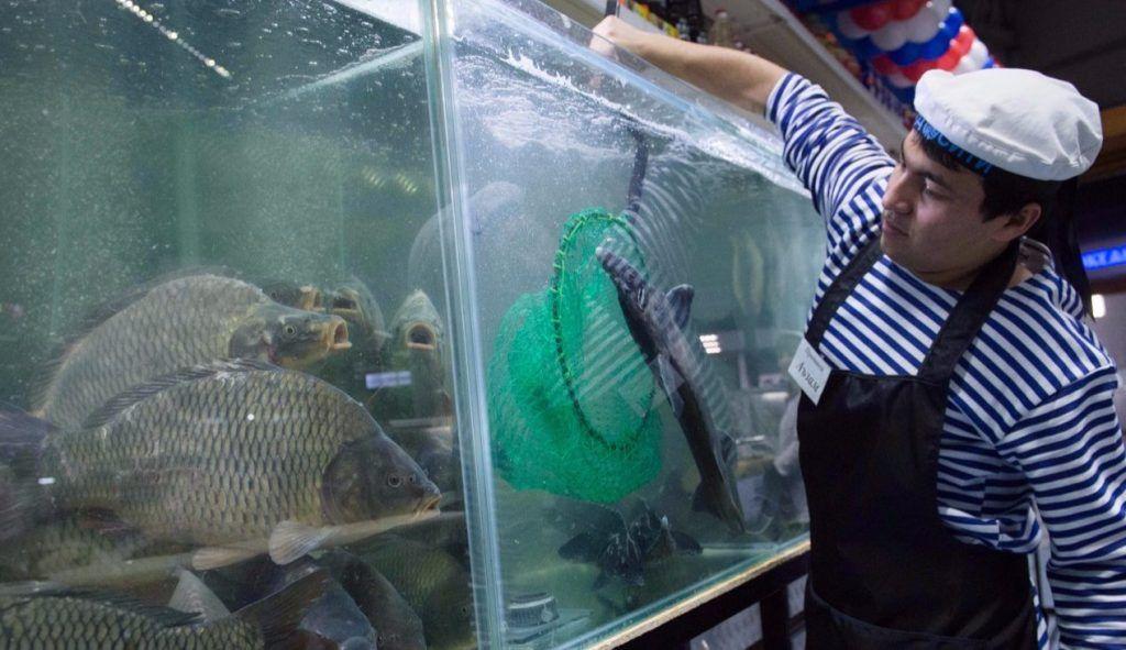 Усиливается борьба с незаконным оборотом осетровых видов рыб в Москве. Фото: сайт мэра Москвы