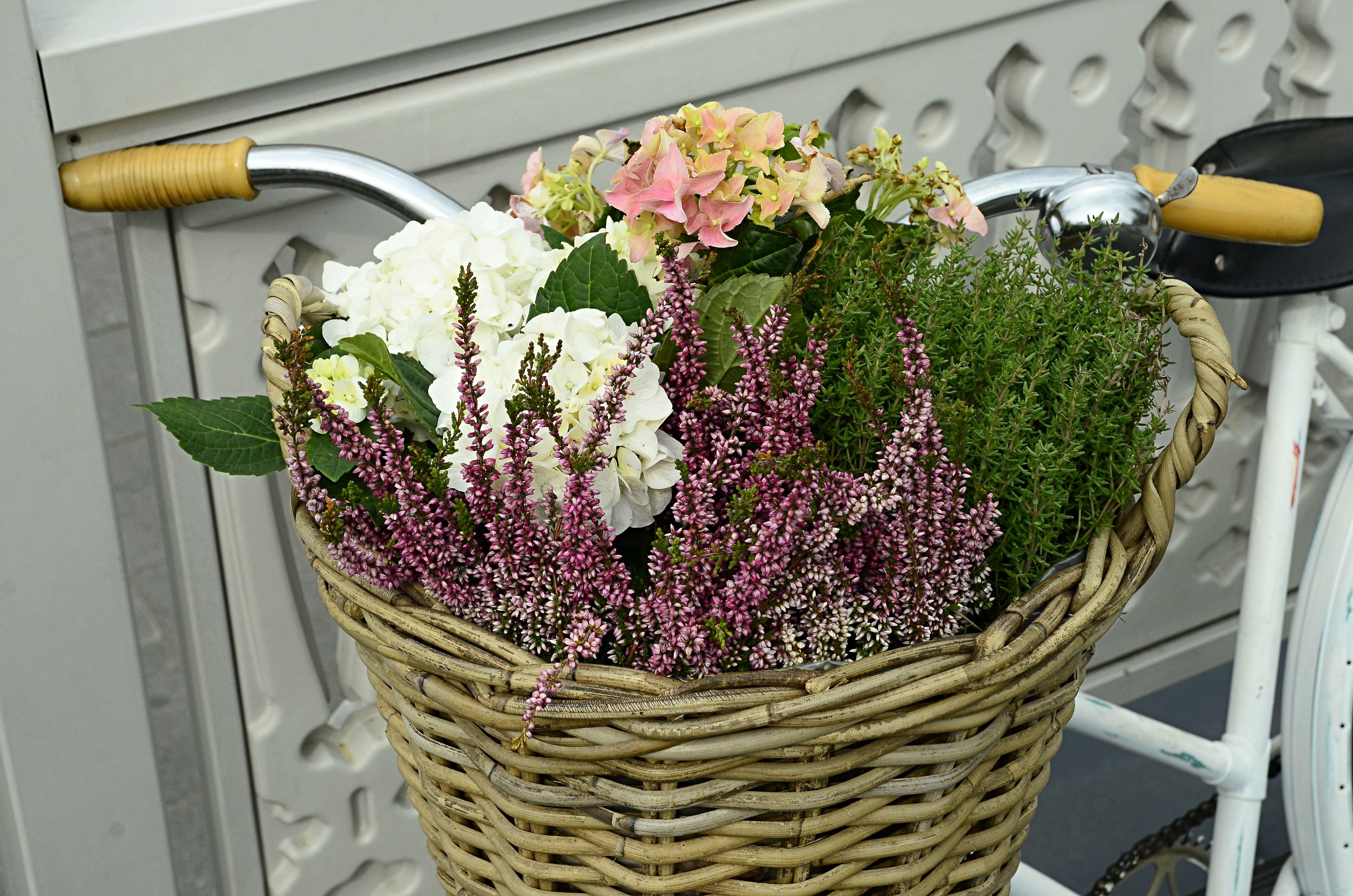 Прием заявок на участие в конкурсе «Цветочный джем» стартовал в столице