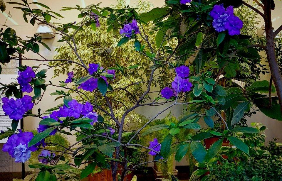 Москвичей пригласили посмотреть на тропические растения в «Царицыне»