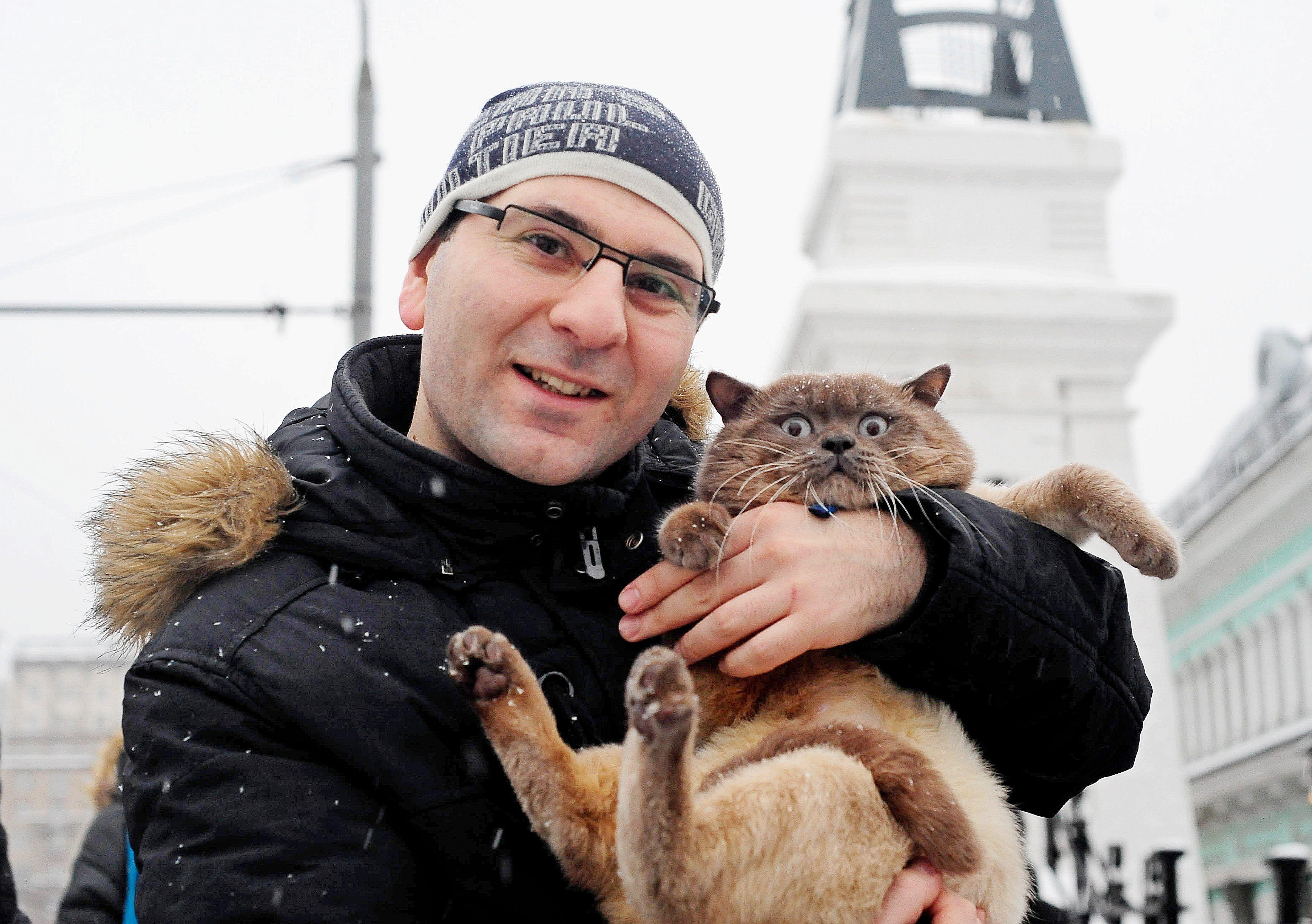 Московские ветеринары призвали не целовать котов