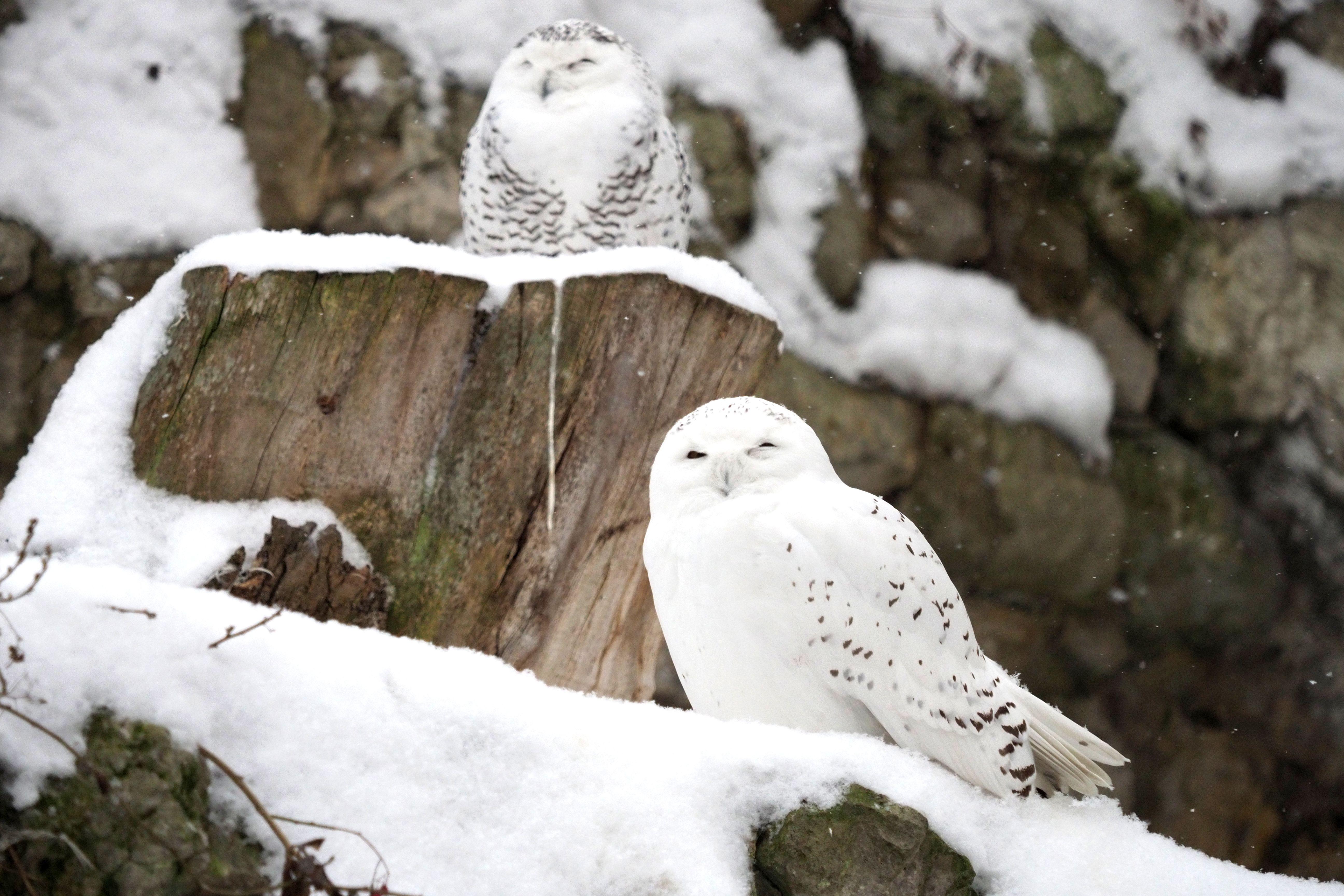 Московский зоопарк подарит лекции и экскурсии на Новый год