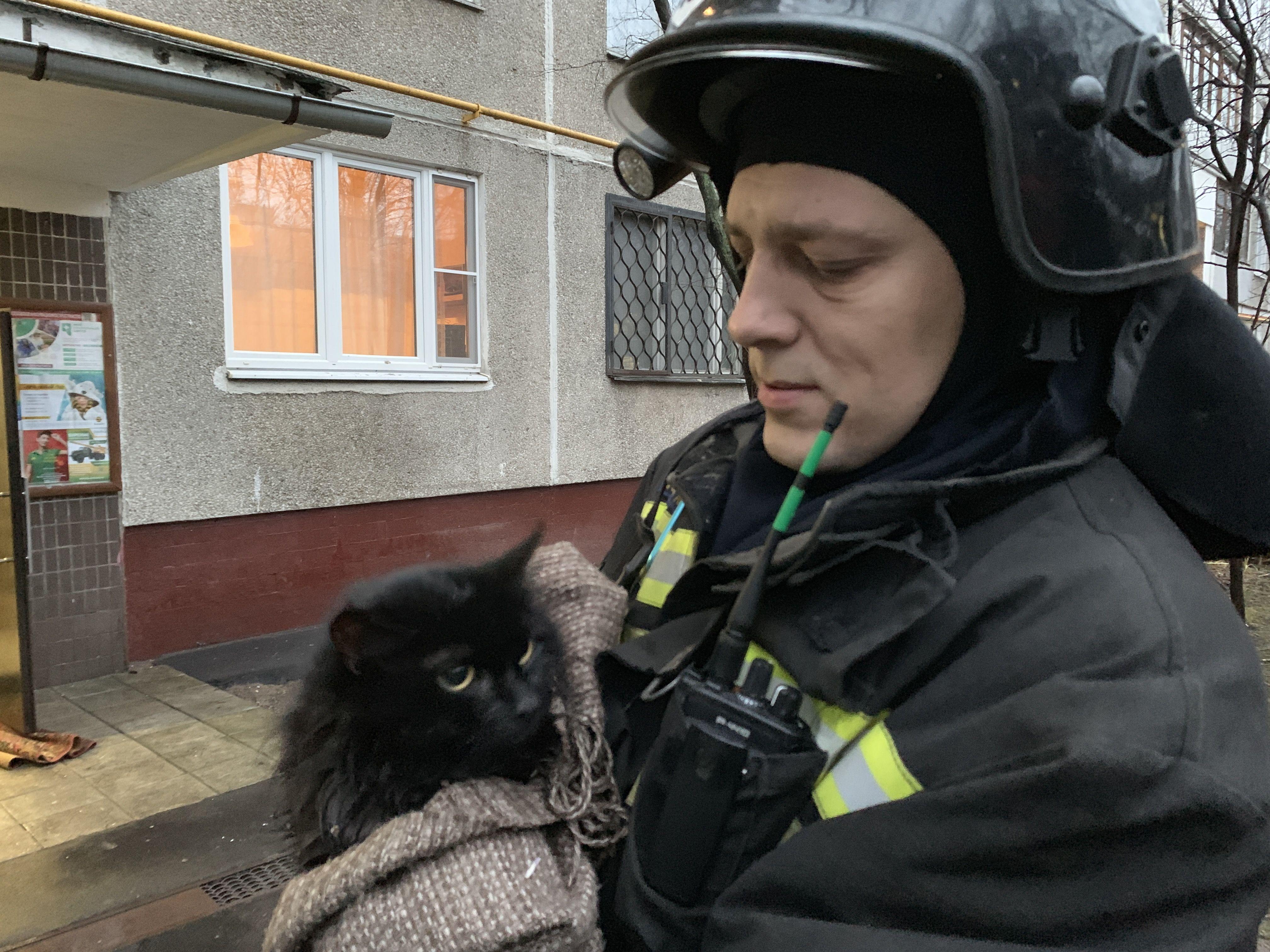 На Юге Москвы огнеборцы спасли кота на пожаре!