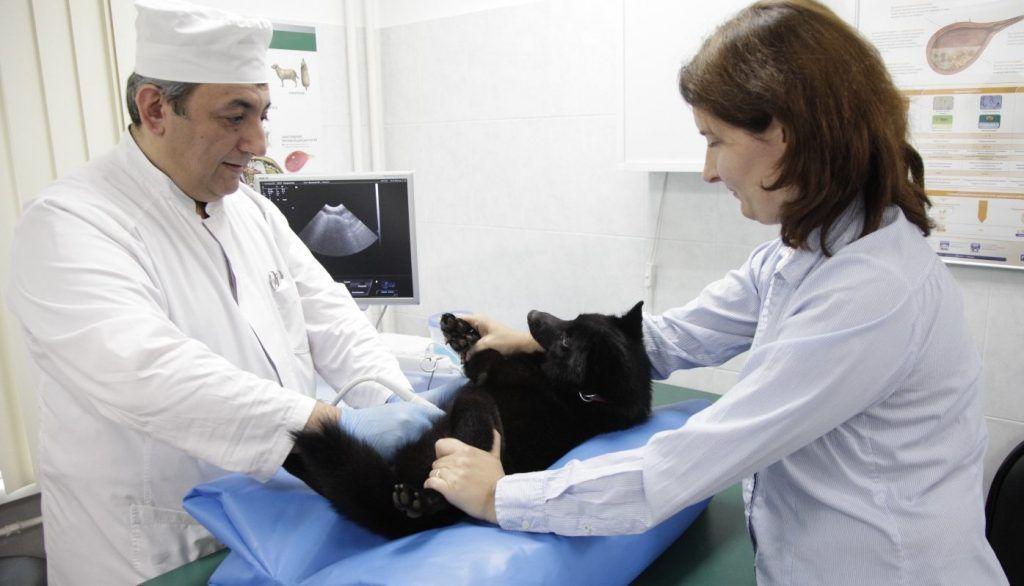 Ветеринарные клиники юга оснастили новым оборудованием. Фото: сайт мэра Москвы