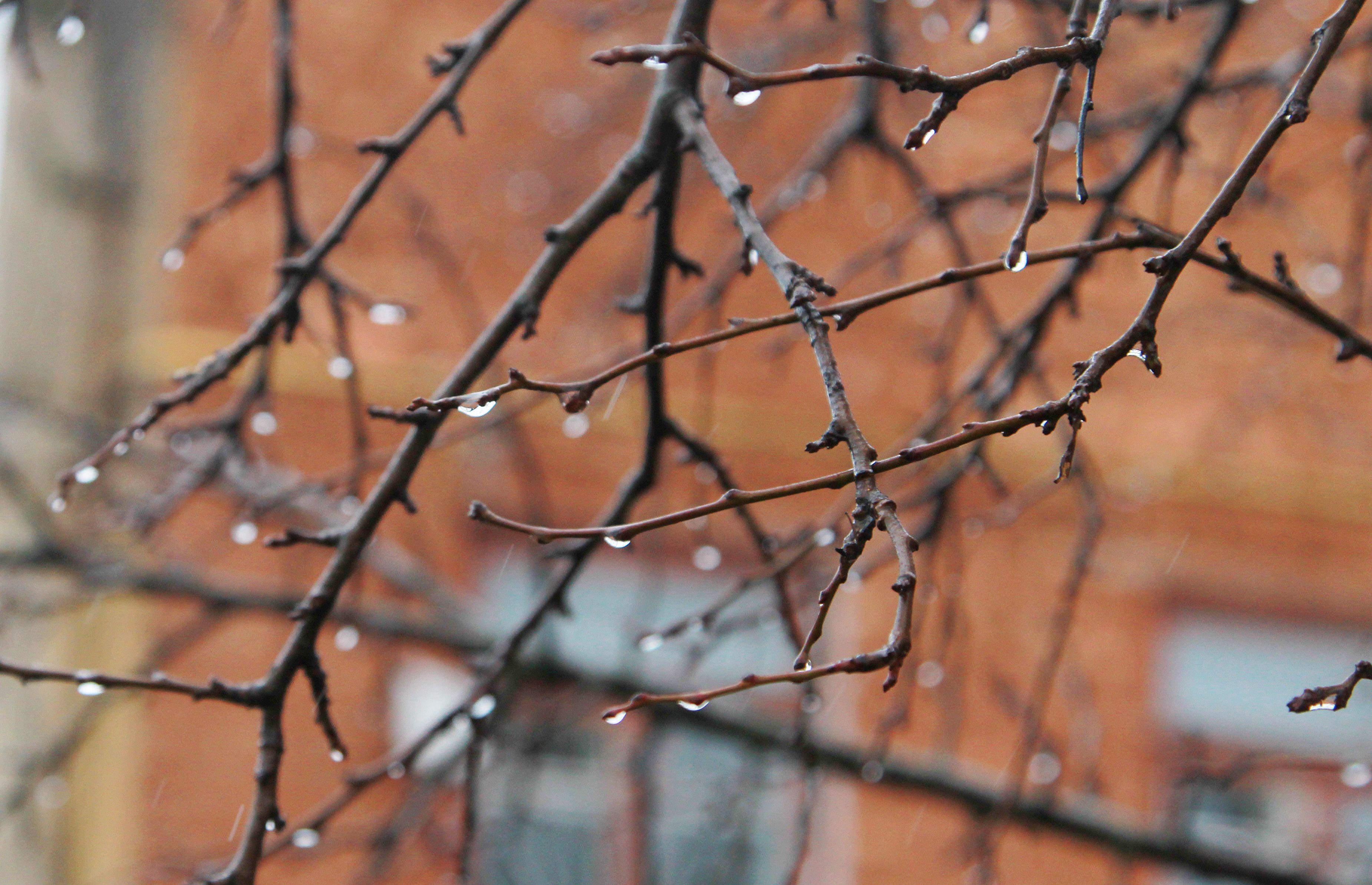 Все следы снегопада будут ликвидированы. Фото: Наталья Нечаева