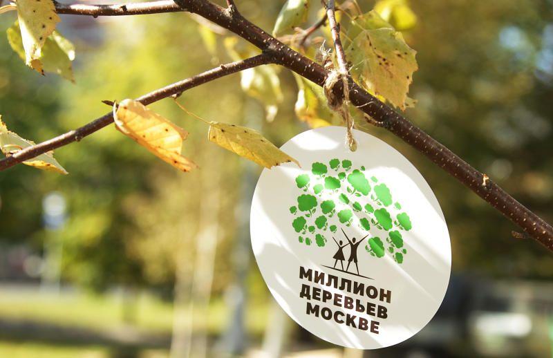 Более 750 тысяч деревьев и кустарников украсят Москву в 2020 году
