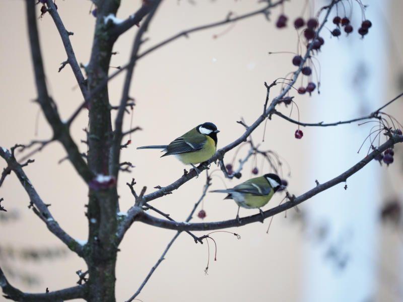 Количество птиц в связи с теплой погодой может увеличиться в Москве