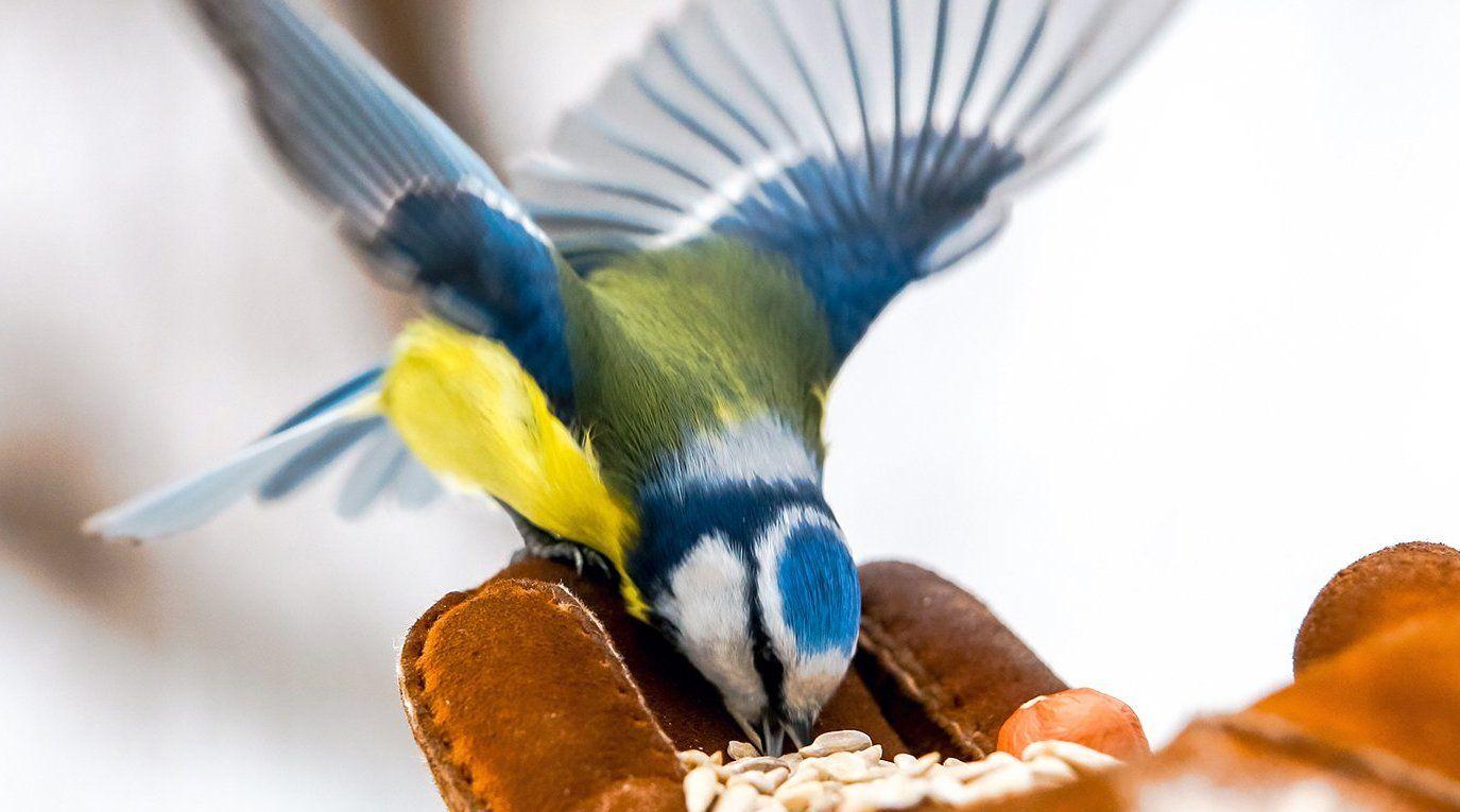 Птицы в городе: гости Бирюлевского дендропарка помогут пернатым перезимовать