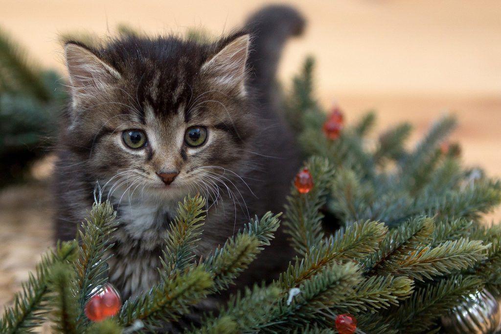 Кот под столом — счастье в семье. Фото: pixabay.com