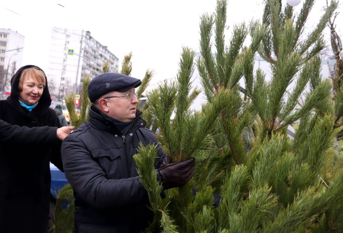 Депутаты Орехова-Борисова Южного проверили елочный базар