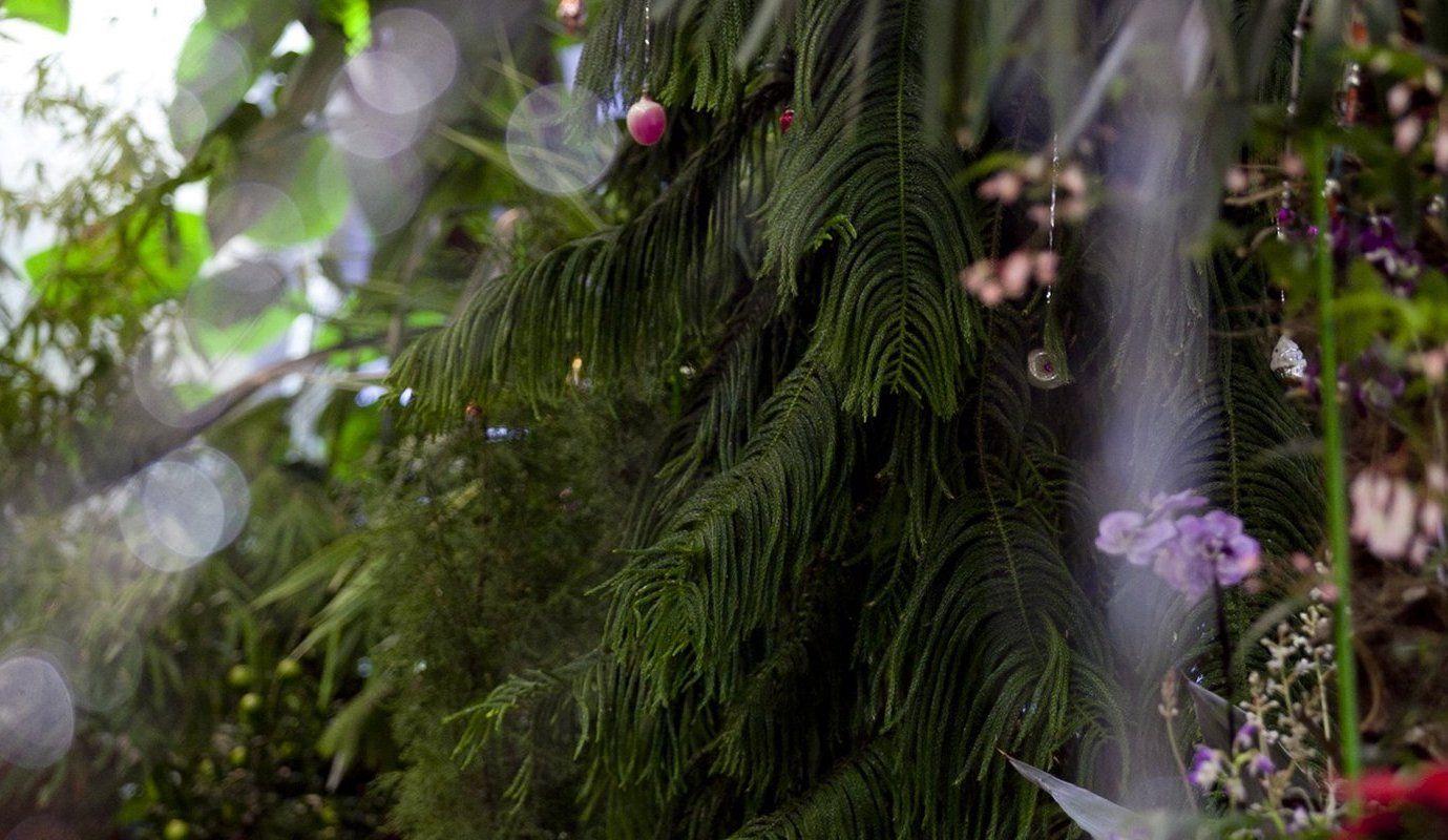 Новый год в царстве Флоры: символы праздников распустились в «Царицыне»