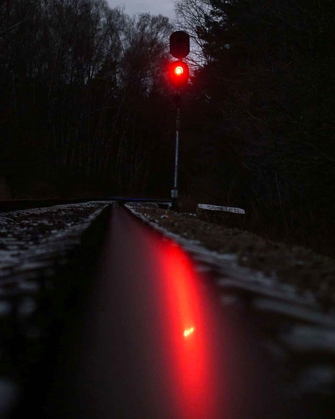 Таинственный красный: народный корреспондент поделился снимком вечернего Бирюлевского дендропарка