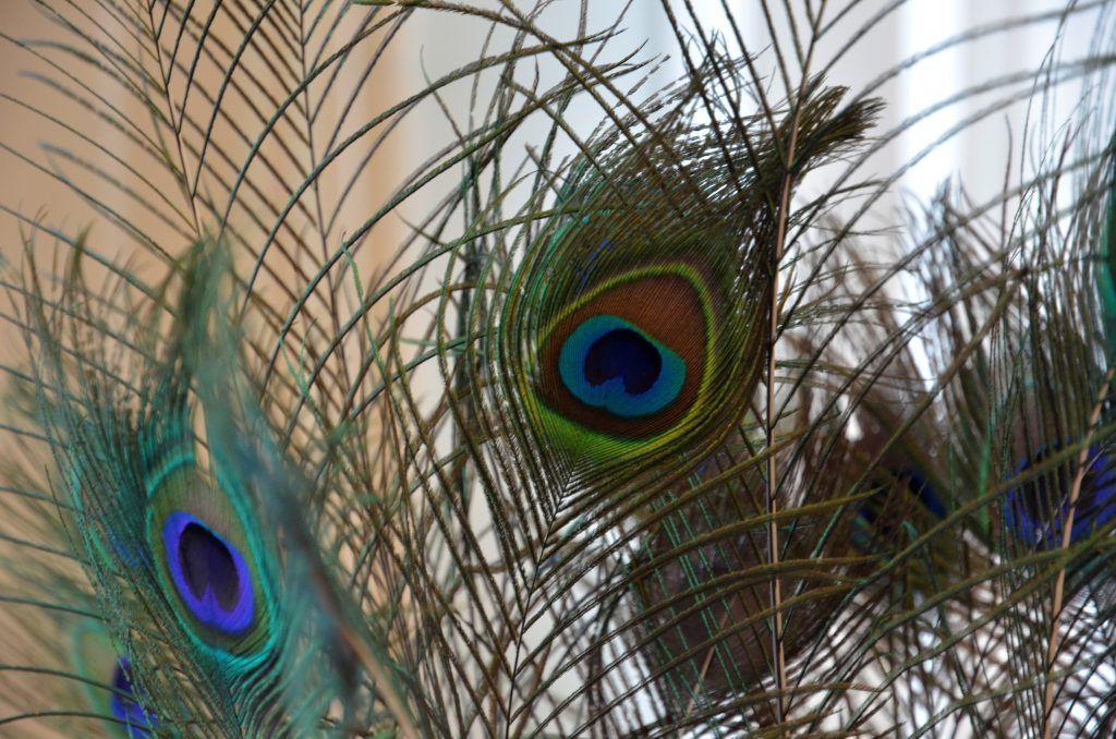 Домашние павлины: птиц в технике оригами смастерят в «Дружбе»