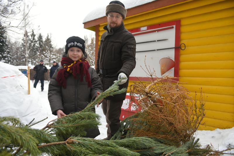 Москвичи сдали более девяти тысяч деревьев с начала акции «Елочный круговорот». Фото: Александр Кожохин