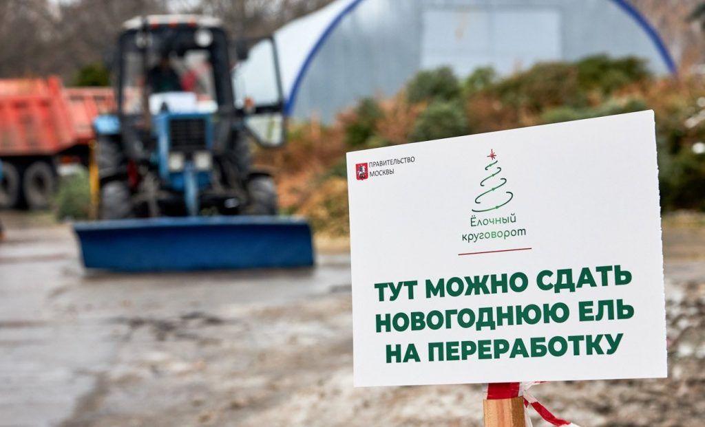 Акция «Елочный круговорот» набирает популярность у москвичей
