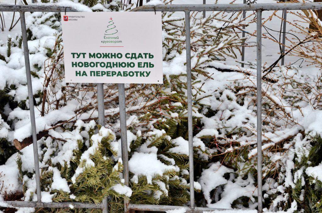 Более 11,2 тысячи елей сдали на переработку жители юга. Фото: Анна Быкова