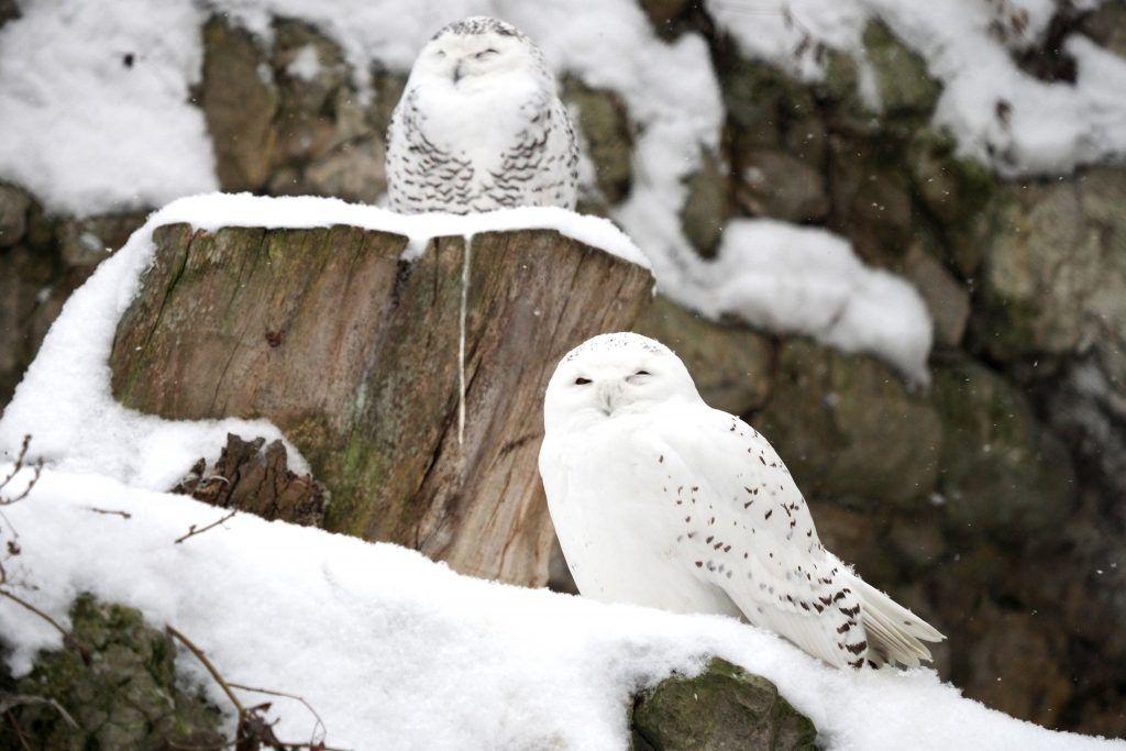 Юным москвичам расскажут о зимующих в столице животных. Фото: Антон Гердо