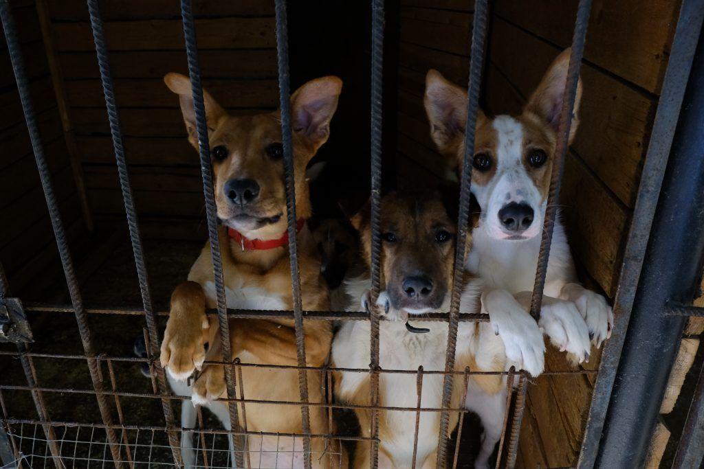 Москвичи забрали более трех тысяч животных из приютов