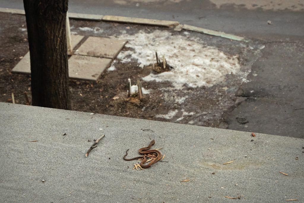 Настоящая или муляж: народный корреспондент сфотографировала змею на козырьке подъезда