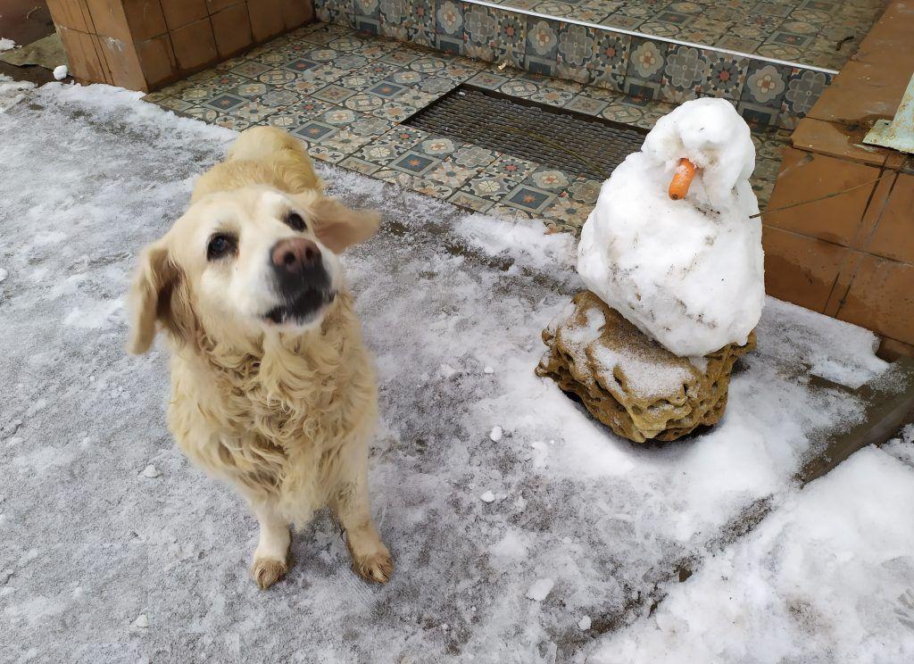 Новый друг Аляски: народный корреспондент поделился забавным снимком своего питомца