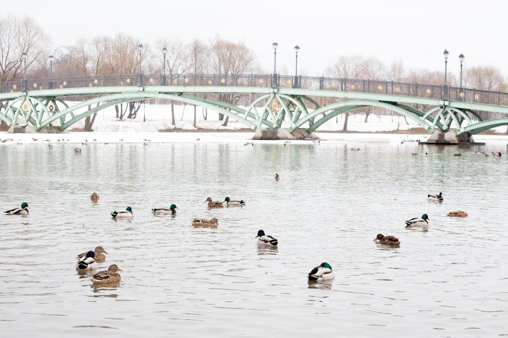 Москва благоустроит более 200 улиц, площадей и водоемов за 2020 год