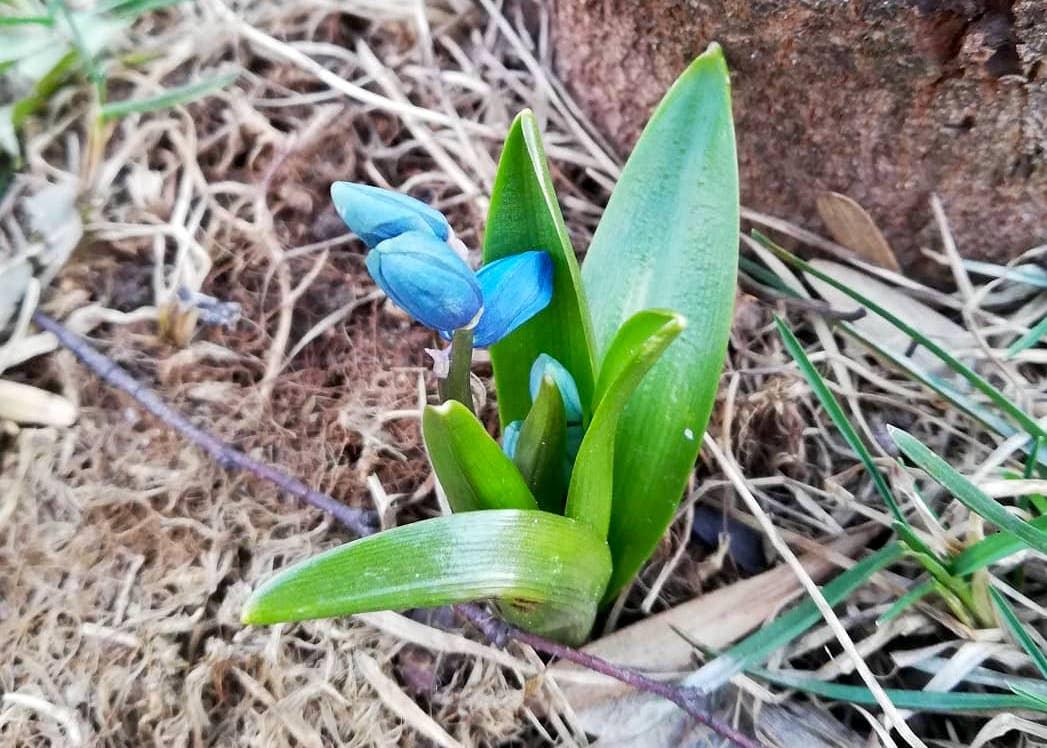 Весне дорогу: первоцветы заметили в Орехове-Борисове Северном