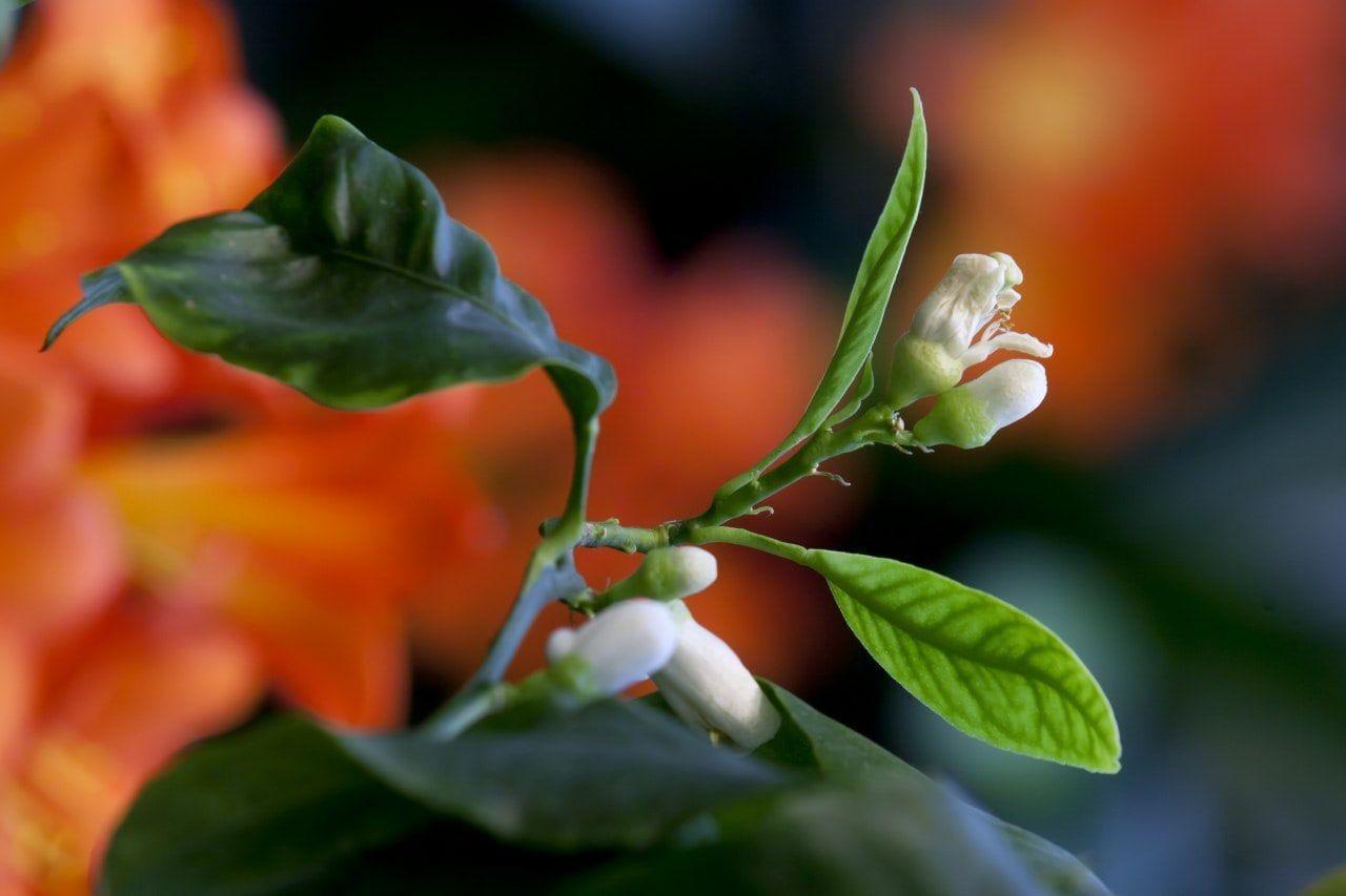 Цитрусовый фреш онлайн: сотрудники «Царицына» выпустили «ботанические беседы»